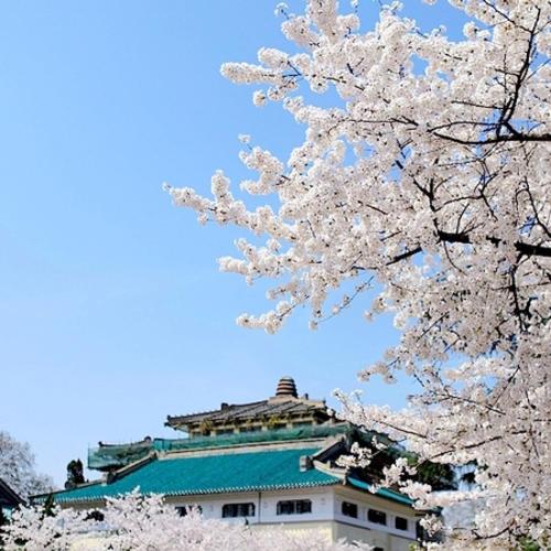 武汉大学樱花三维全景展示